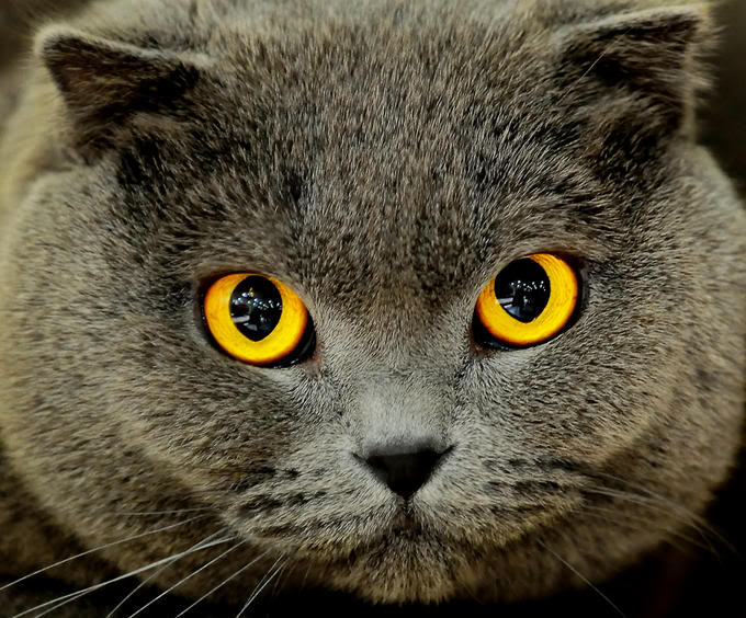 awesome-cat-eye%20(8).jpg
