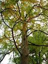 Fotos Gratis Ramas de árboles verdes
