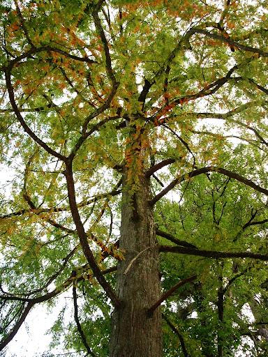 Árbol con ramas entrecruzadas
