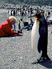 Allan Hansen and King penguin. South Georgia Island