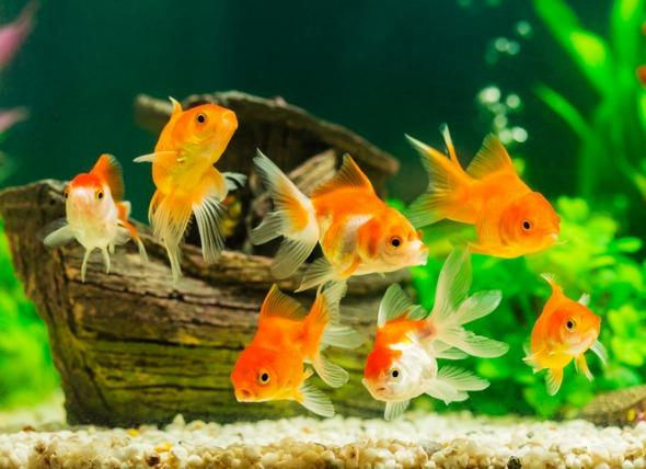 Can You Actually Keep Fish in Bowls? | PetMD