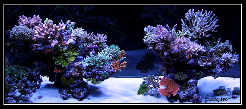 My 110 Gallon Peninsula Reef Tank Page 9 Reef Central Online Community