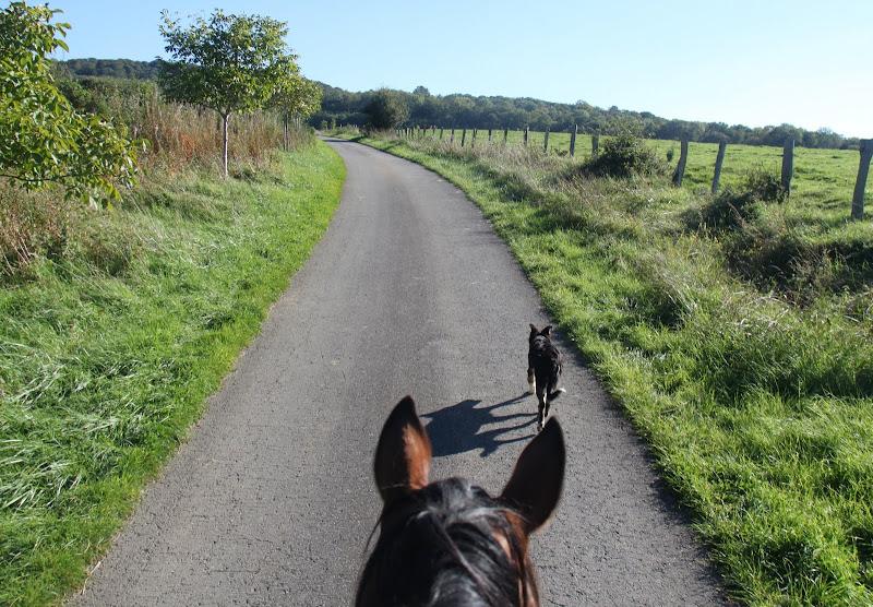Rando à cheval avec chienne d'un an (question km)  IMG_3629