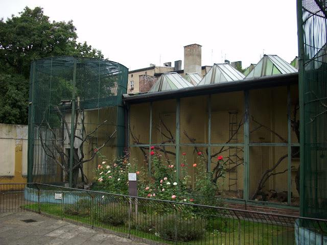 Fragment muru (z lewej strony) między pawilonem waranów a starą małpiarnią