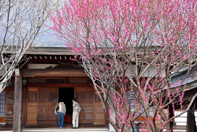 西光寺トップ写真