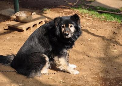 西光寺境内に犬