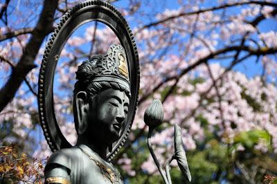観音さまと桜