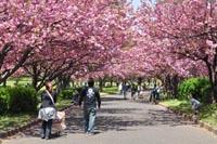 水上公園の八重桜記事へ