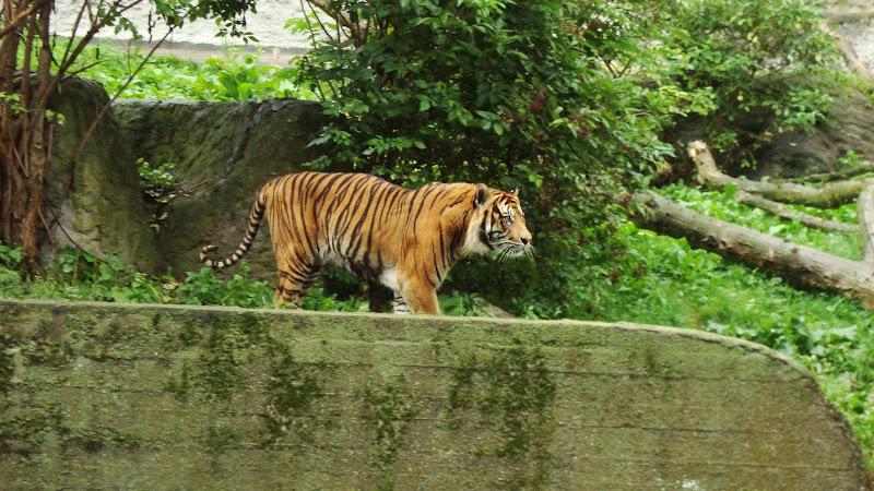 Warszawskie zoo zaprasza!