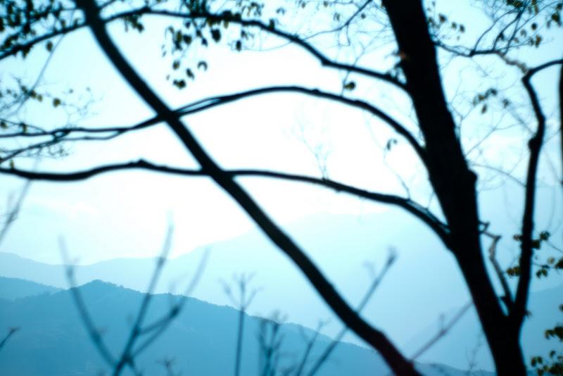 梅峰台大林場+旁邊的清靜