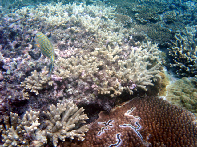 さんご礁と海の魚・レディエリオット島の写真