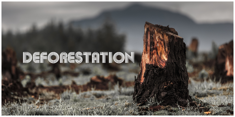 deforestation cause and effects The harmful effects of deforestation essay 1942 words | 8 pages deforestation has caused many huge impacts on the environment and we should cease the logging and.