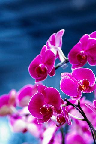 Cvijeće, proljeće download besplatne slike pozadine Apple iPhone