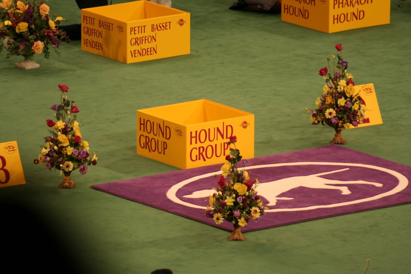 Day 1 of Westminster Kennel Club - The History