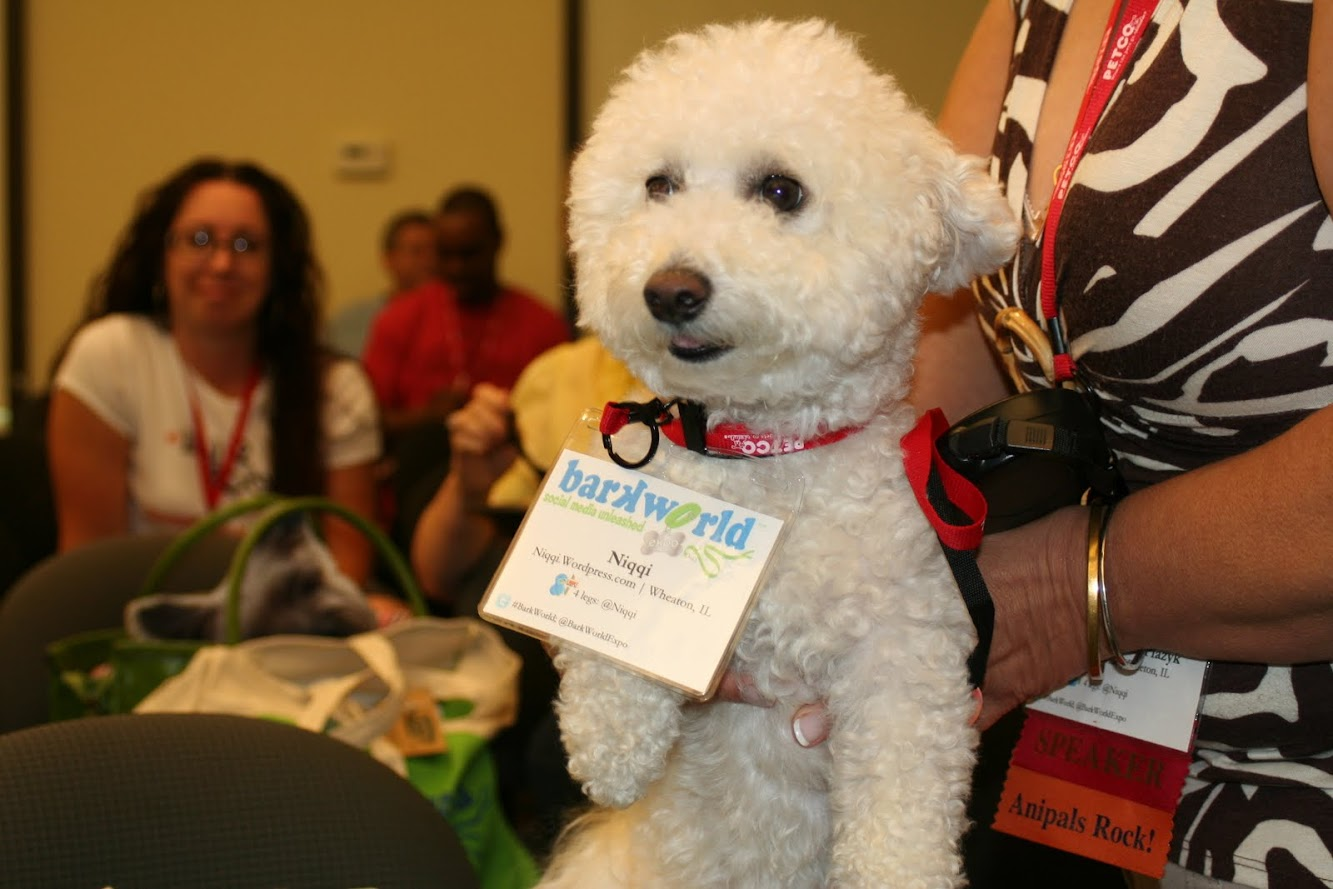 Pictures from #BarkWorld