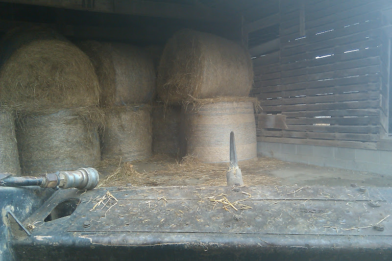 View from the skid loader driving into the barn to get a round bale of hay