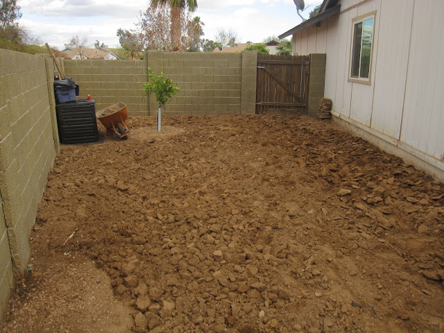 Uromastyx garden remodel: digging up soil