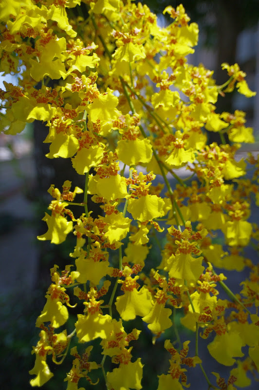 DA15 與花