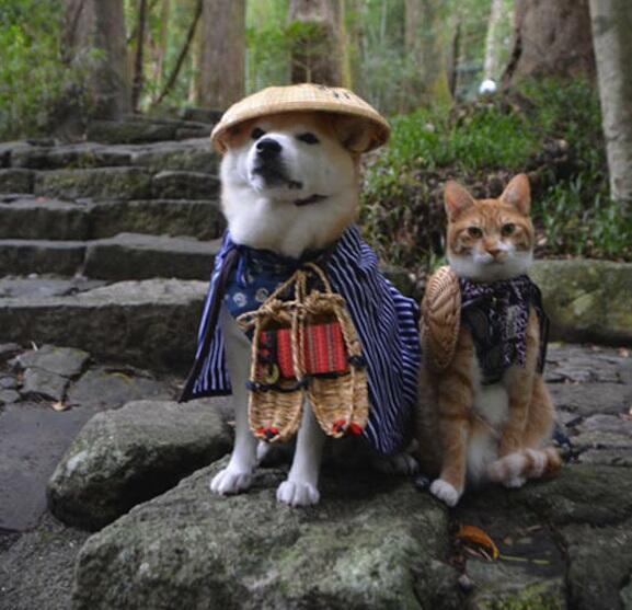 Image result for Shiba Inu and cat