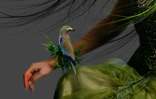 Posição da ave