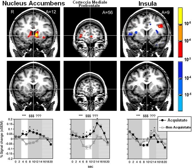 Un esperimento di neuromarketing che mostra la scansione di un cranio umano: è possibile vedere quali aree del cervello si attivano durante il processo decisionale di acquisto, dimostrando che le scelte effettuate avvengono ben prima che le esplicitiamo. Fonte immagine: Neuron Cell Press