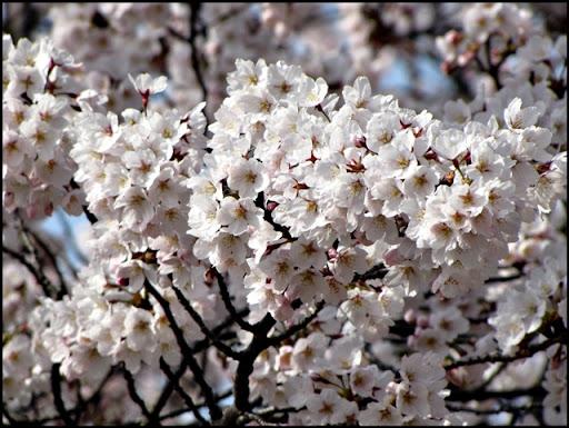 Life in Jeju 69 ดูดอกไม้กันต่อที่มหาวิทยาลัยเชจู และเที่ยววัดกันตอนเย็น