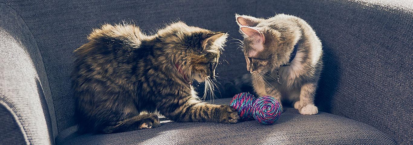 Image result for kittens training