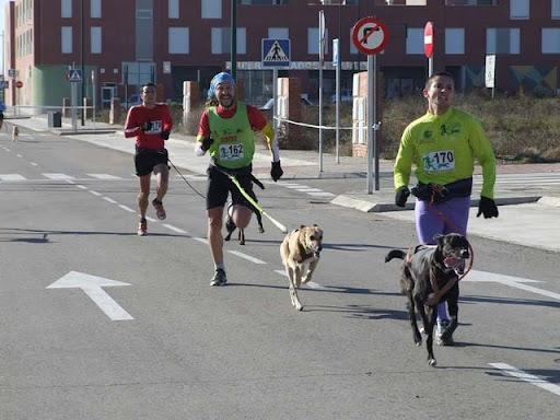 Dudo, corredor canino busca adoptante DSCF9942