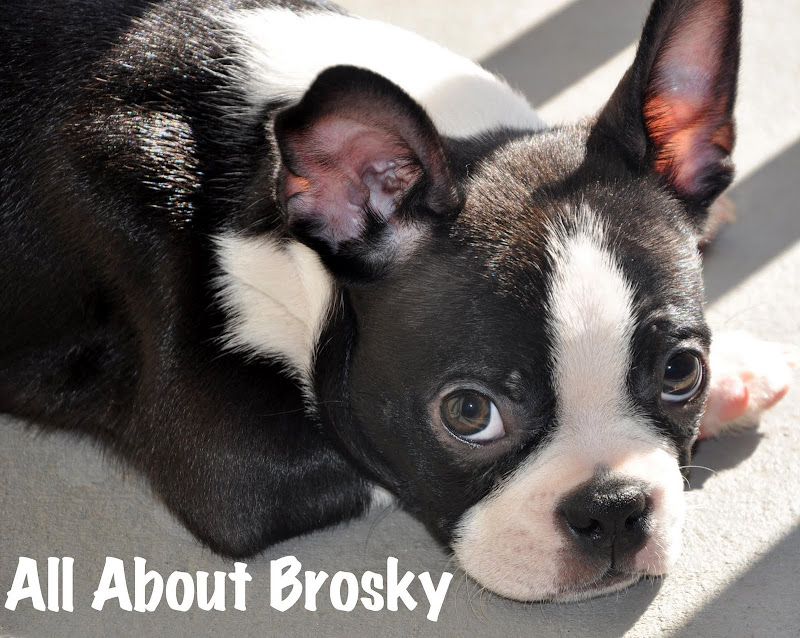 All About Brosky