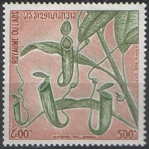 N.ampullaria.jpg