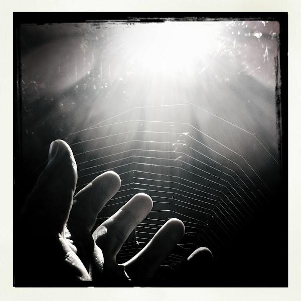 alf's spiderweb