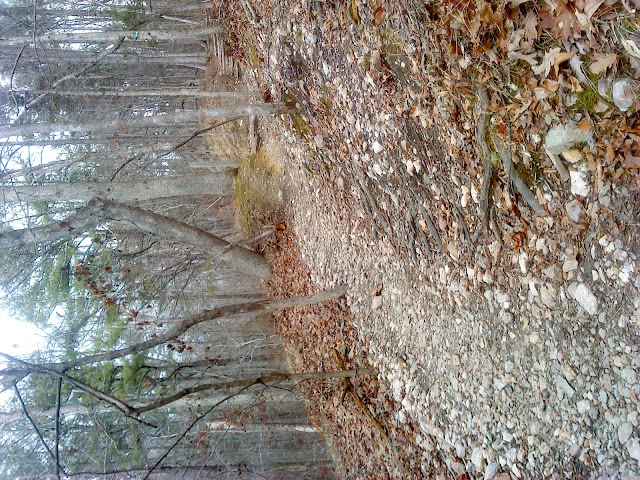 Sycamore Trail at Umstead