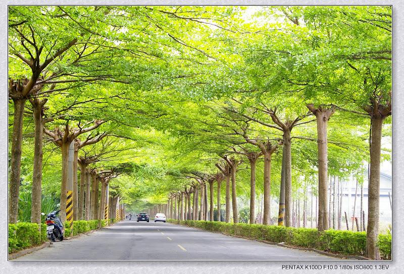 發現一條超美的綠色隧道