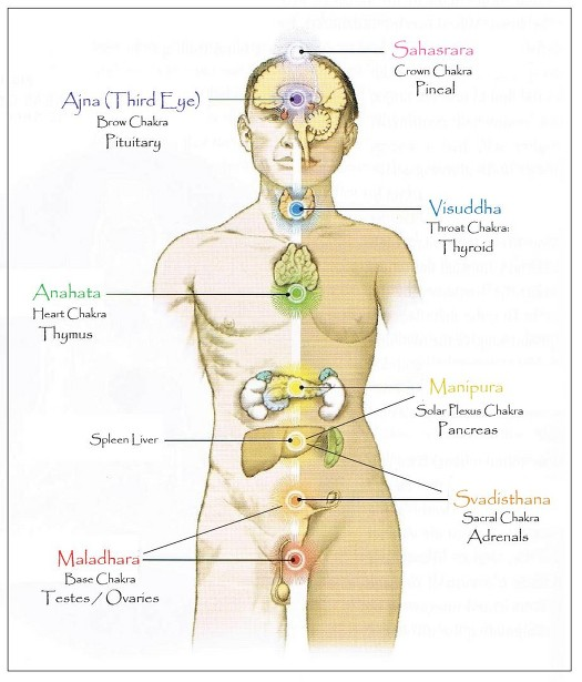 7 Wheels – Chakras, the Nervous System and TCM | Tirisula Yoga