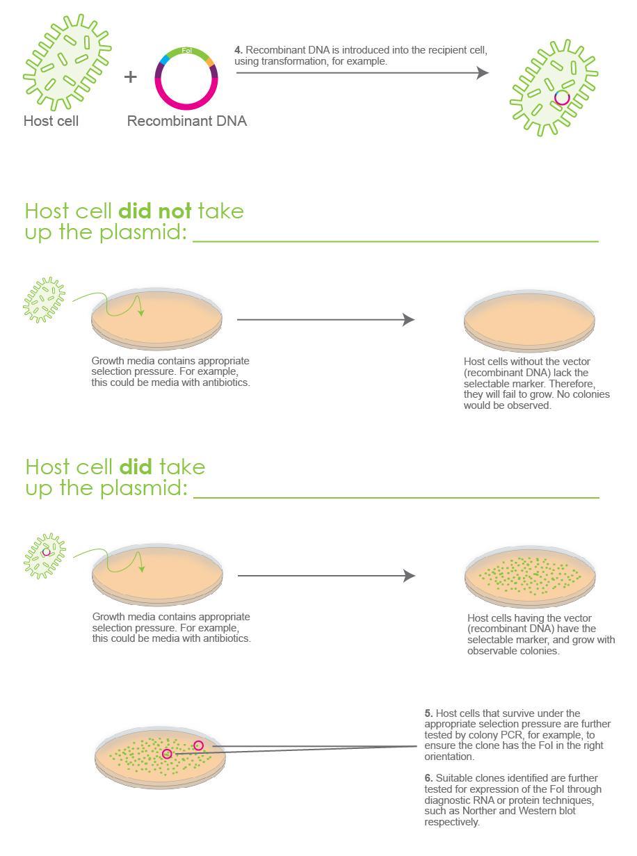 Illustrative example of molecular cloning part 2
