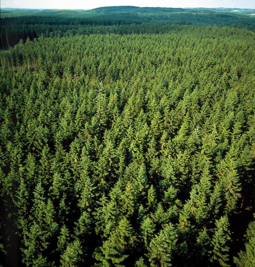 Tòa Thánh nhấn mạnh đến sự cần thiết phải bảo vệ rừng