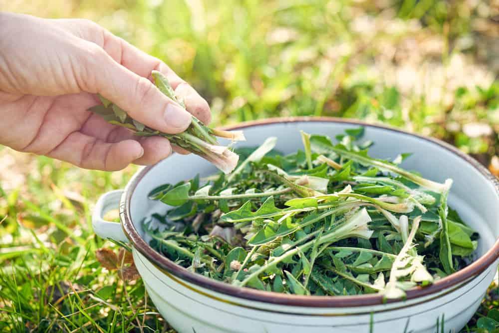 Cách sử dụng thảo dược đúng cách và hiệu quả