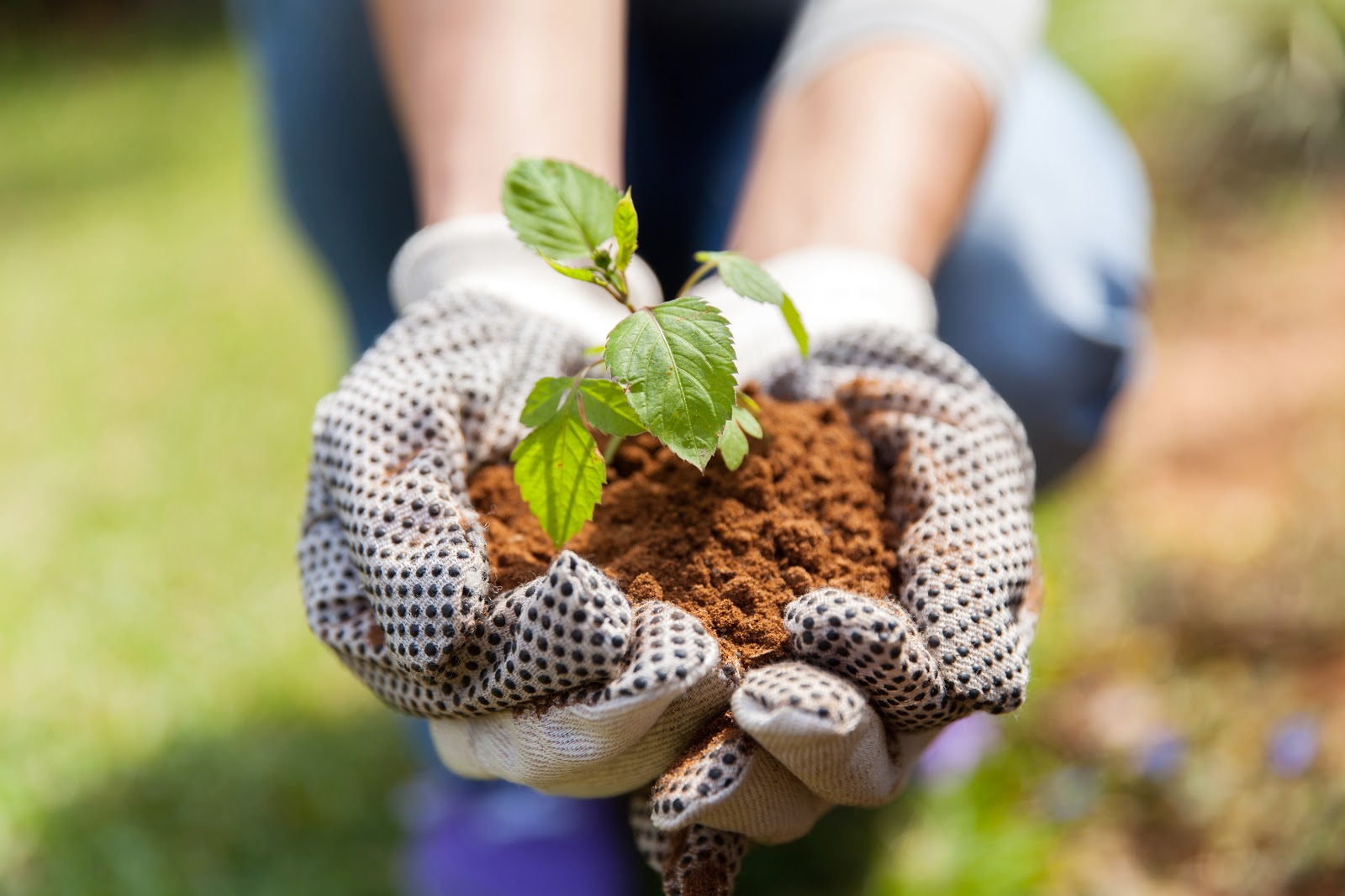 Hands holding a small plant in dirt outside tranquil