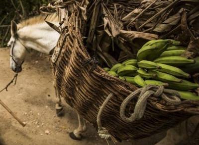 casuá-bananas.jpg