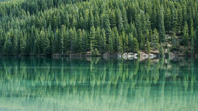 A northern landscape showing how the coniferous trees push right to the edge of the water, growing on what appears to be rock.