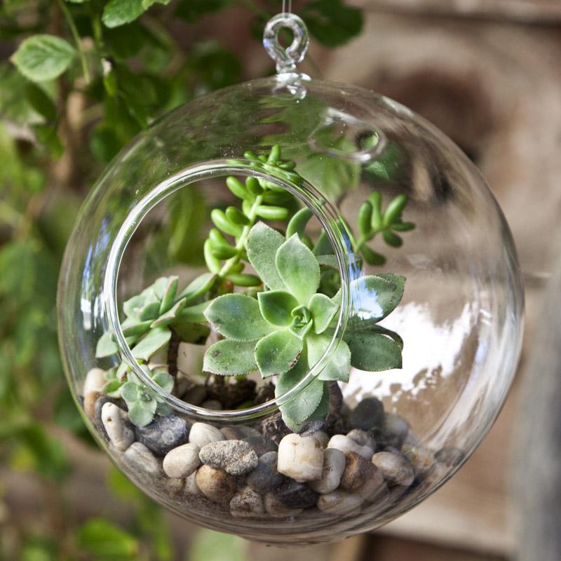 hanging-globe-terrariums-2.jpg