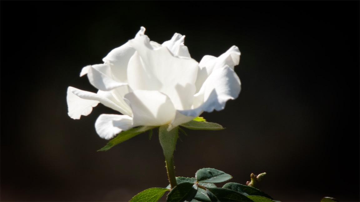 White Dway R.jpg
