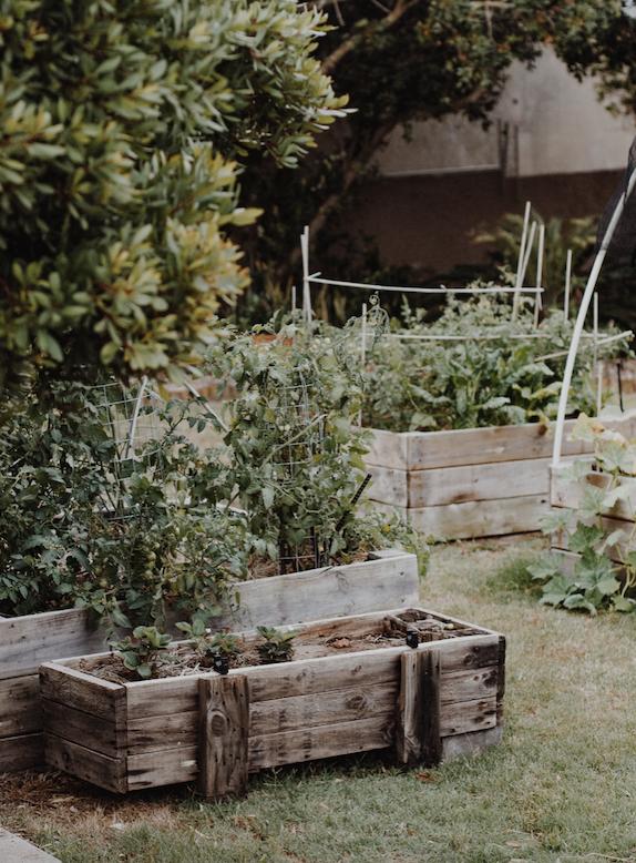 DIY permaculture vegetable gardening