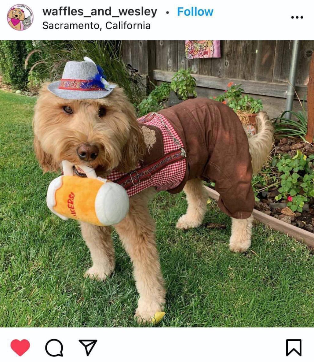 Oktoberfest Halloween Costume Ideas For Dogs
