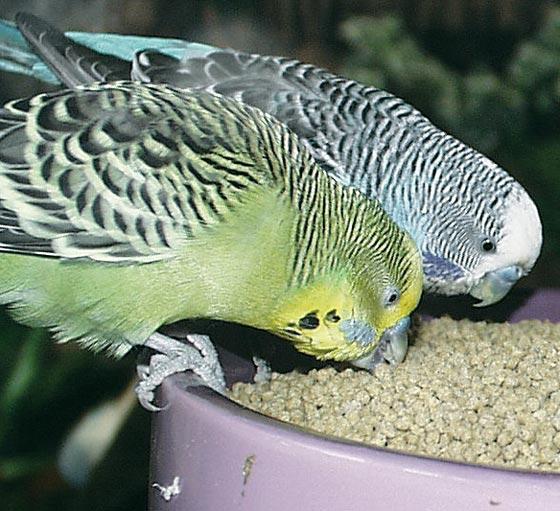 These pet store birds have been properly tested and are kept housed as a single species