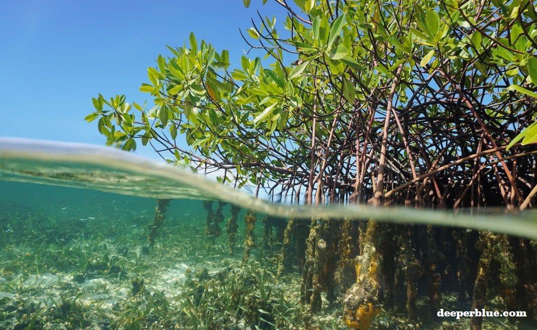 Mangrove Indonesia, Penyelamat Bumi yang Disisihkan