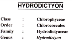 Hydrodictyon- Algae, Introduction, Characteristic ||2019||