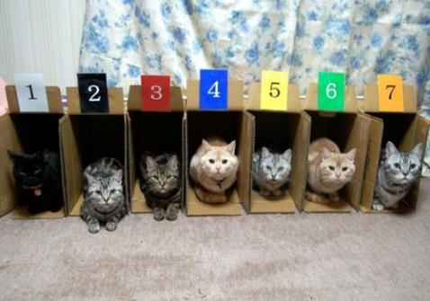 D:\Junk\the-world_s-top-10-best-images-of-cats-in-boxes-7.jpg