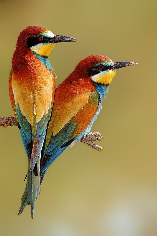 عکاسی از پرندگان عکاسی هنری