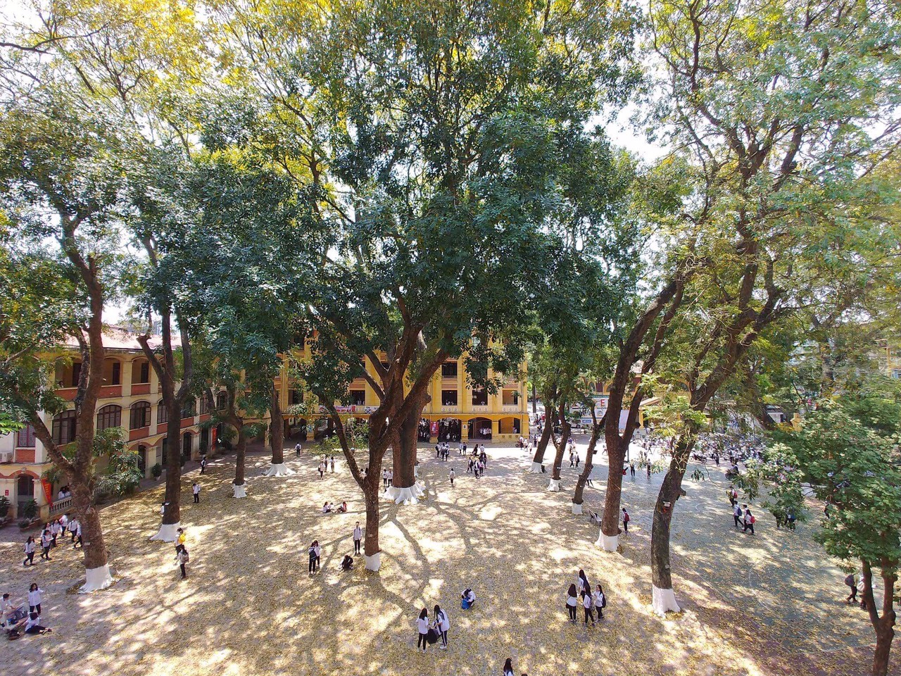 Bật mí bí mật của 3 ngôi trường nổi tiếng ở Hà Nội: Có 1 sở thú ngay trong trường, học hành bị stress quá thì rủ nhau trốn lên cửa trời - Ảnh 5.